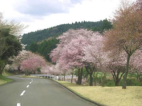 裾野カンツリー倶楽部訪問記