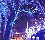 2014年 冬 イルミネーション