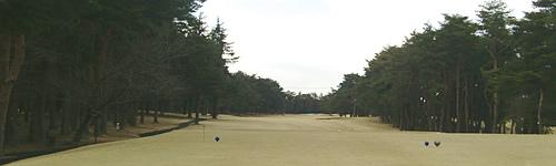 edosaki-p20