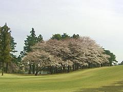 飯能ゴルフクラブ 訪問記