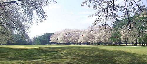 大宮ゴルフコース 訪問記