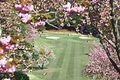 井戸端会議 桜がきれいなゴルフ場
